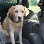 Judge the Arson Dog